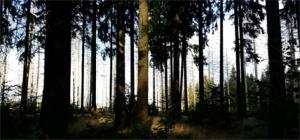 bomen-1